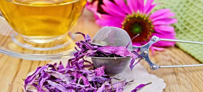 Полезный препарат из эхинацеи можно приготовить и дома - ето не займет у вас много времени