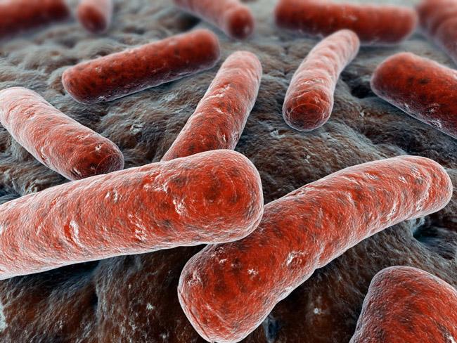 Микроорганизм гарднерелла обитает в микрофлоре влагалища