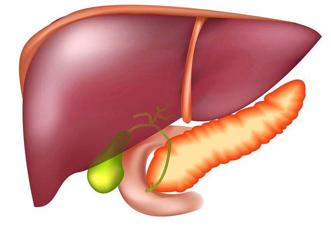Печень - один из важнейших органов человека, который из-за разных факторов может подвергаться определенным заболеваниям