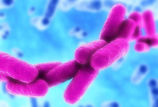 Бактерии клебсиеллы