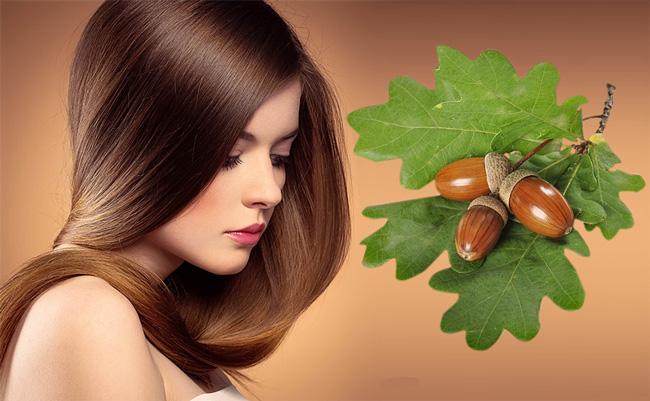 Регулярное полоскание волос отваром из коры дуба, укрепляет волосы, делает их блестящими, помогает избавиться от перхоти