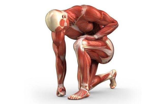 Запущенные случаи полимиозита приводят к мышечной атрофии