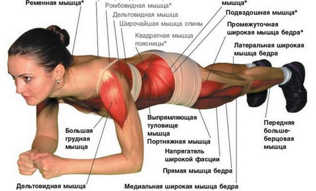 Планка – универсальное статическое упражнение, являющееся идеальным вариантом физических нагрузок для людей, не имеющих возможности регулярно посещать спортивный зал