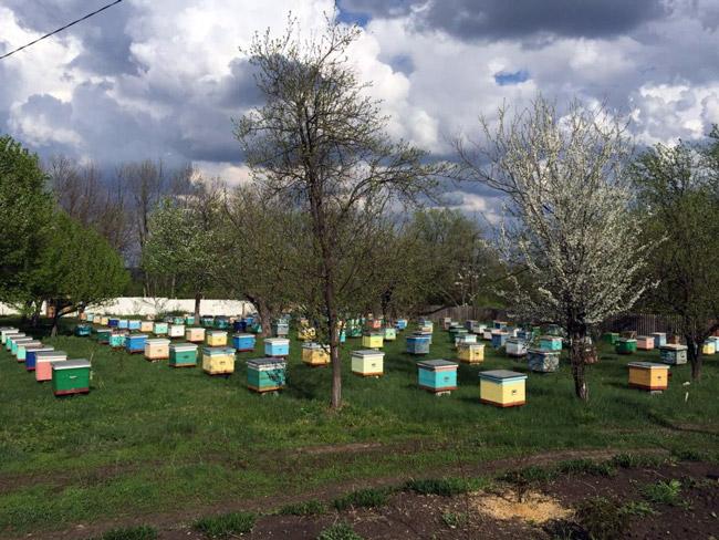 Пчелы заготавливают пергу для того, чтобы питаться ею в холодное время года