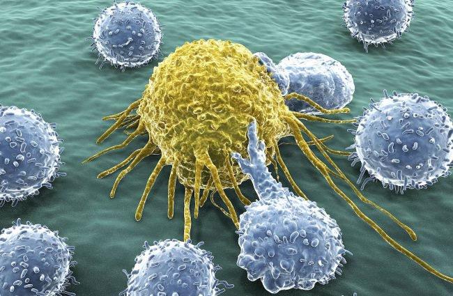 Моноциты – это клетки в крови, которые играют главную роль в поддерживании жизнедеятельности организма, они защищают нас от различных заболеваний