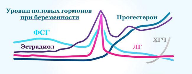 1-я фаза характеризуется ростом уровня эстрадиола и прогестерона, где достигается максимальное значение в день овуляции. Вначале 1ого триместра уровень прогестерона и эстрадиола в крови увеличивается, формирует благоприятные условия для роста эмбриона и предотвращает угрозу выкидыша