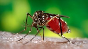 Мазь проявляет положительный эффект даже в борьбе с расчесами после укусов различных насекомых, а также активно применяется при лечении ожогов 1 и 2 степени, порезов и прочих повреждений кожи