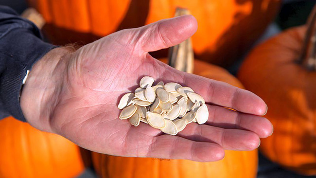 Ежедневная безопасная норма потребления тыквенных семечек не более 100 грамм, чрезмерное употребление может привести к побочным эффектам