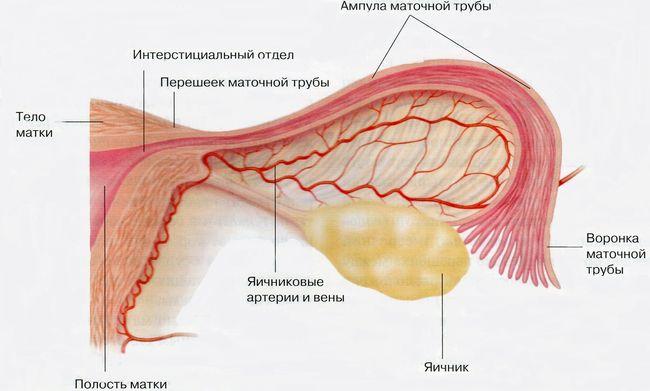Заболевания поражающие маточные трубы и яичники называют воспаление придатков