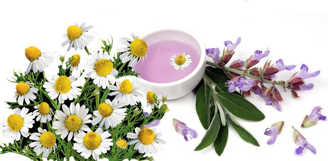 Растворы ромашки и шалфея используются в народной медицине для лечения вульвита