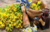 Зверобой – лечебные свойства зверобоя, состав, показания, рецепты при заболеваниях